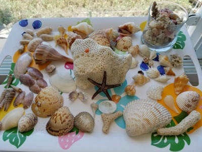The best shelling on Siesta Key
